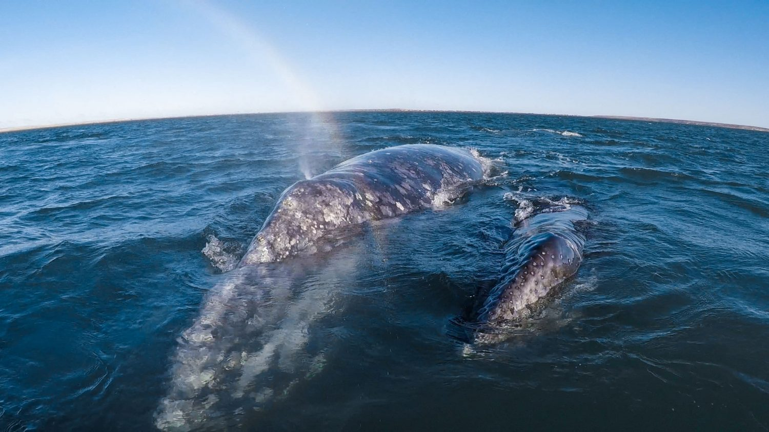 Baja: Whales to the South